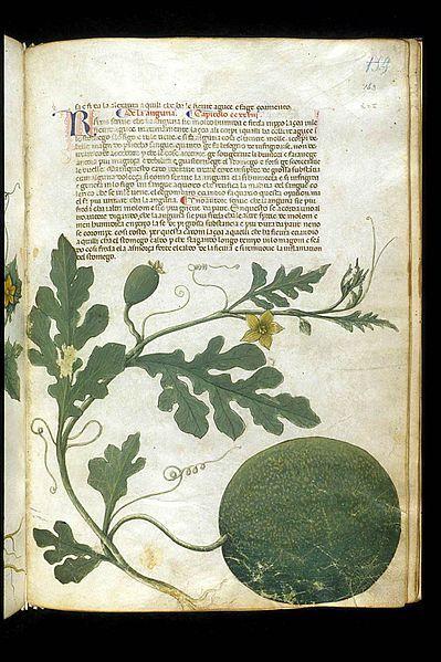 The Carrara Herbal